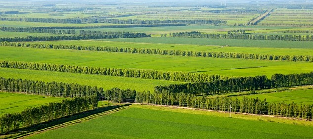 What is shelterbelts/windbreak trees?